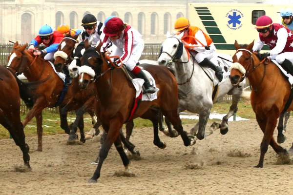 Photo de SPEEDY SPEED cheval de PLAT