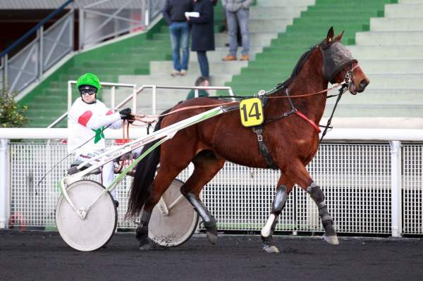 Photo de DEGANAWIDAH cheval de TROT ATTELE