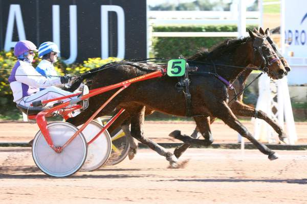 Photo de BALDI STAR cheval de TROT ATTELE