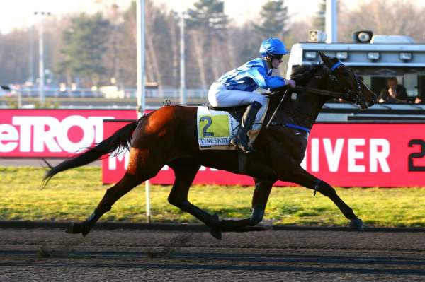 Photo de FLAMBOYANT BLUE cheval de TROT MONTE