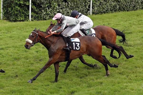 Photo de CARDIEL cheval de PLAT