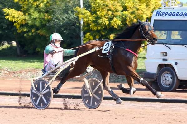Photo de GRANIT DU CHATELET cheval de TROT ATTELE