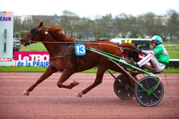 Photo de DISCO D'OCCAGNES cheval de TROT ATTELE