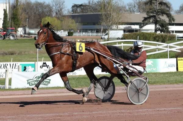 Photo de GWENDOLO BELLO cheval de TROT ATTELE