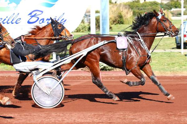Photo de ENCIERRO JYL cheval de TROT ATTELE