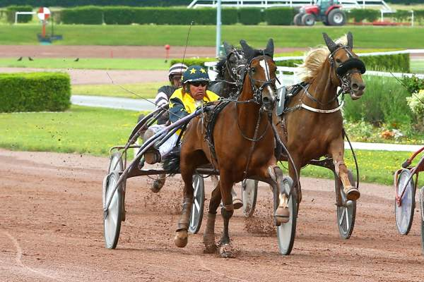 Photo de FOSTINE DARK cheval de TROT ATTELE