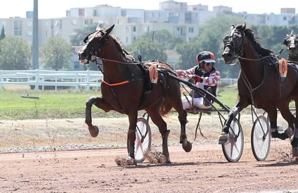 Photo de FABIO DE LOU cheval de TROT ATTELE