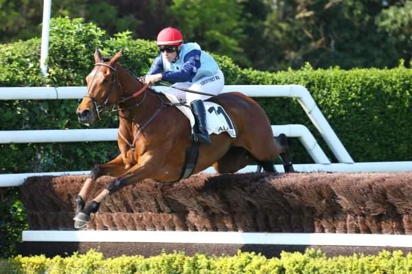 Photo de FABULOUS DRAGONESS cheval de HAIES