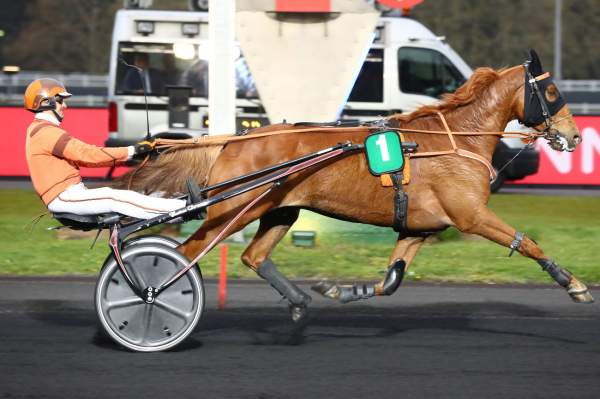 Photo de DUC DE LAISSARD cheval de TROT ATTELE