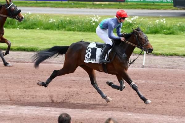 EMERAUDE DEL PHEDO - La fiche CANALTURF du cheval, performances pmu,  pédigré, évolution de la cote en direct, résultats rapports, courses 2020