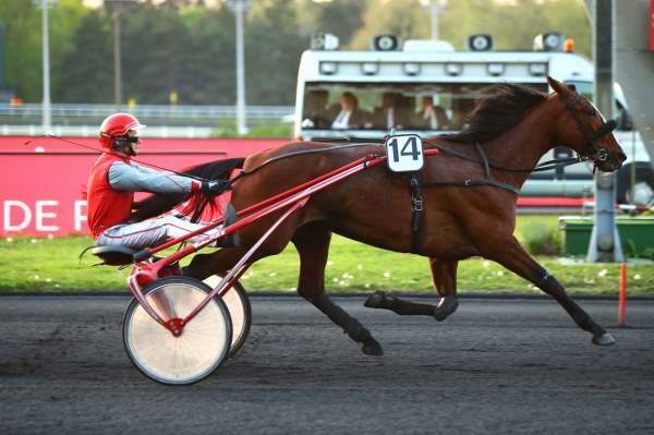 Photo de CHICA DE JOUDES cheval de TROT ATTELE