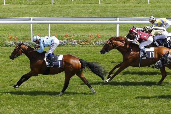 La photo de Ascot Angel Quinté+ Pmu HANDICAP DE BORDEAUX 2019