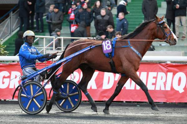 Photo de SUPER NICE cheval de TROT ATTELE