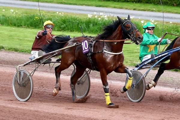 Photo de EVEIL DU LUPIN cheval de TROT ATTELE