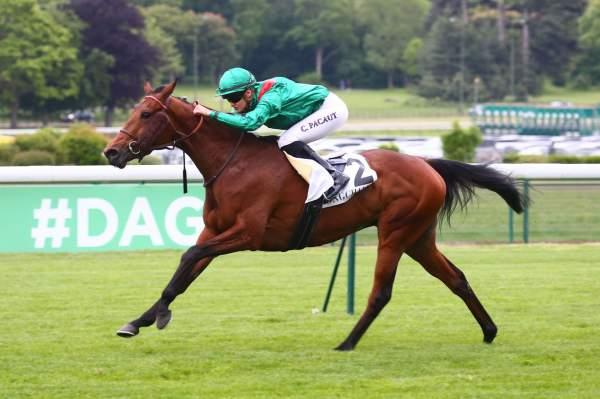 Photo de CALDERA cheval de PLAT