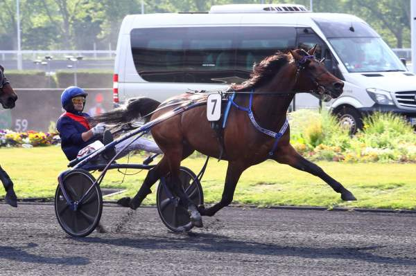 Photo de VALOKAJA HINDO cheval de TROT ATTELE