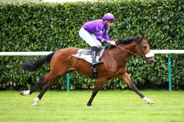 Photo de HURRICANE IVOR cheval de PLAT