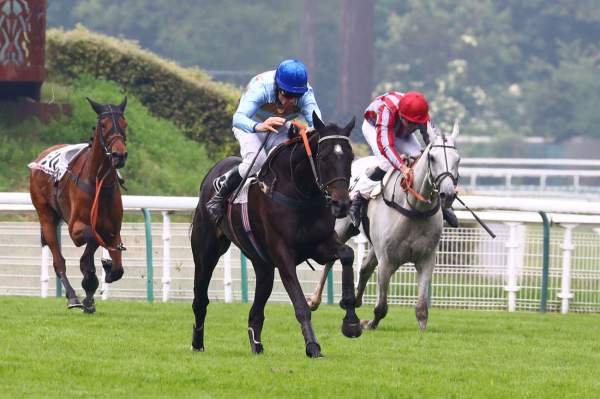 La photo de Carriacou Quinté+ Pmu ZEturf Grand Steeple-Chase de Paris 2019 à Auteuil