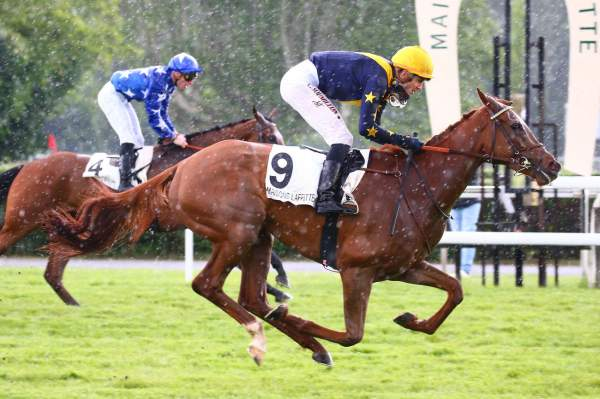 Photo de GOLDEN BOX cheval de PLAT
