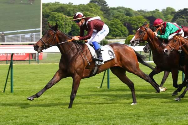 Photo de TOSEN SHAUNA cheval de PLAT