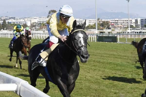 Photo de THIAGO cheval de PLAT