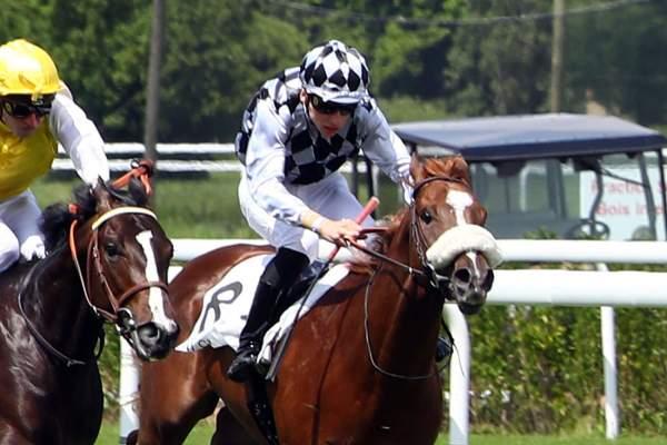 Photo de LORDELIO cheval de PLAT