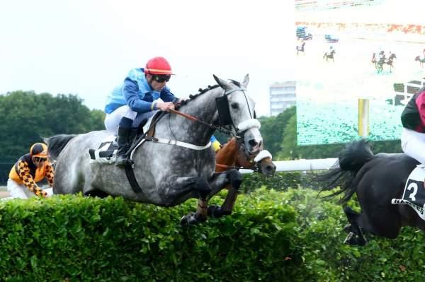 Photo de CALNUTZ cheval de STEEPLE CHASE