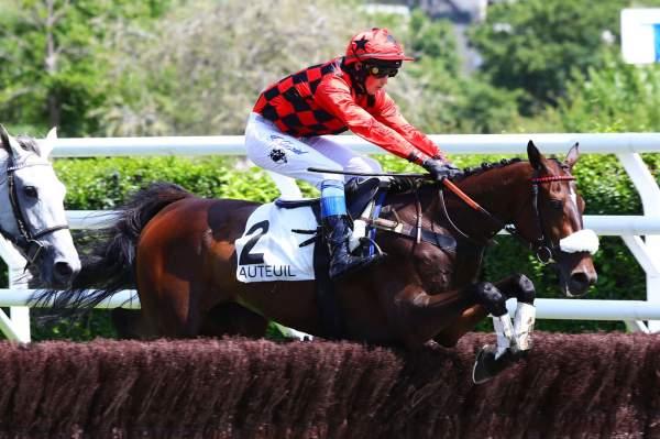Photo de STAR VIXA cheval de HAIES