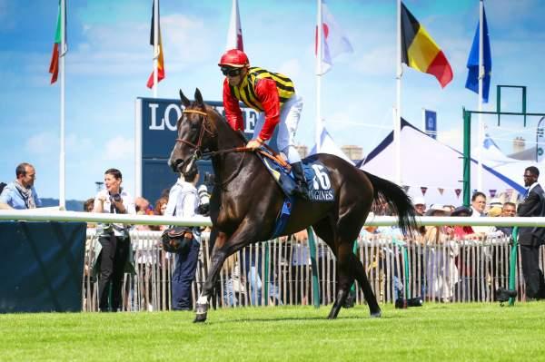 Photo de COMMES cheval de PLAT