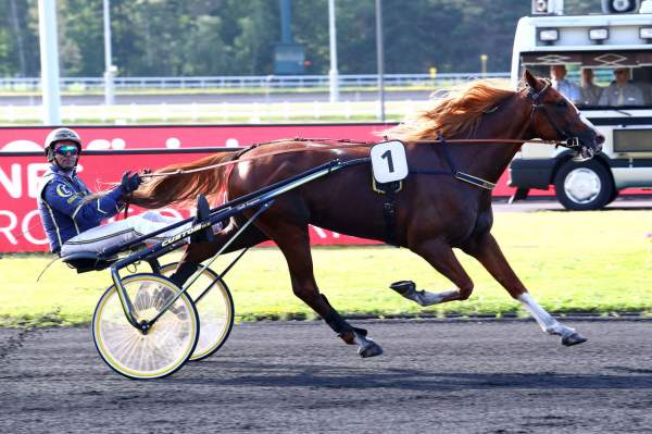 Photo de NORTON COMMANDER cheval de TROT ATTELE