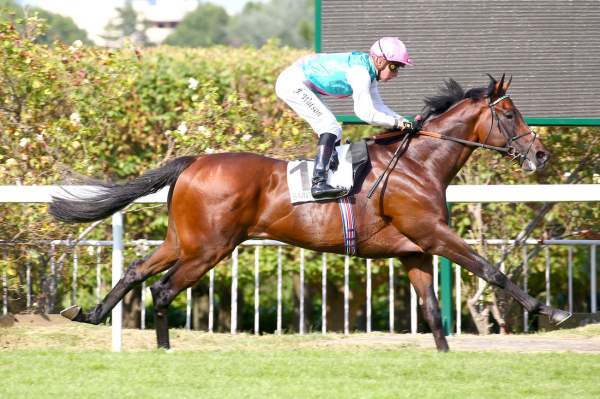 Photo de HEADMAN cheval de PLAT