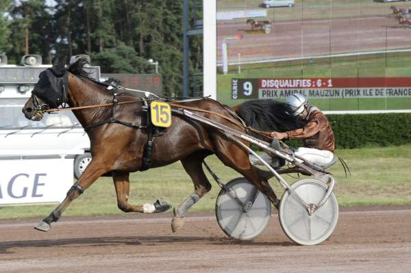 Photo de EXTREME DESBOIS cheval de TROT ATTELE