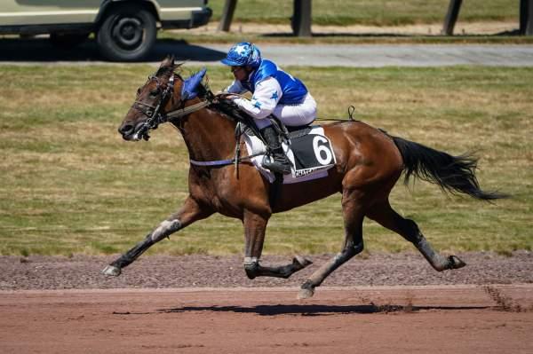 DOUCHKA WIND - La fiche CANALTURF du cheval, performances pmu, pédigré,  évolution de la cote en direct, résultats rapports, courses 2020