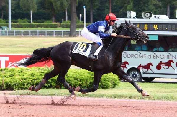 Photo de GINKGO ROCQ cheval de TROT MONTE