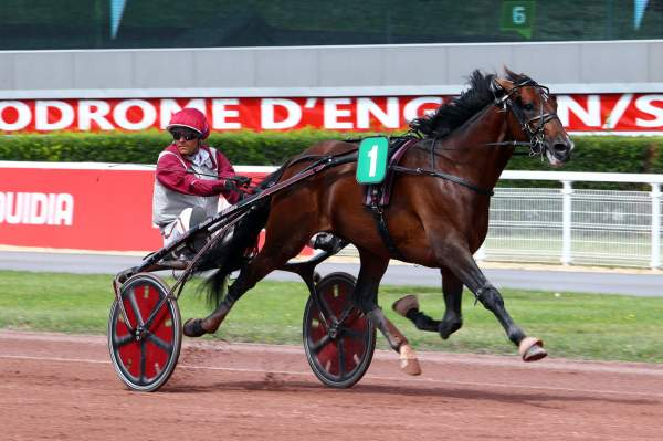 Photo de GOTLAND cheval de TROT ATTELE