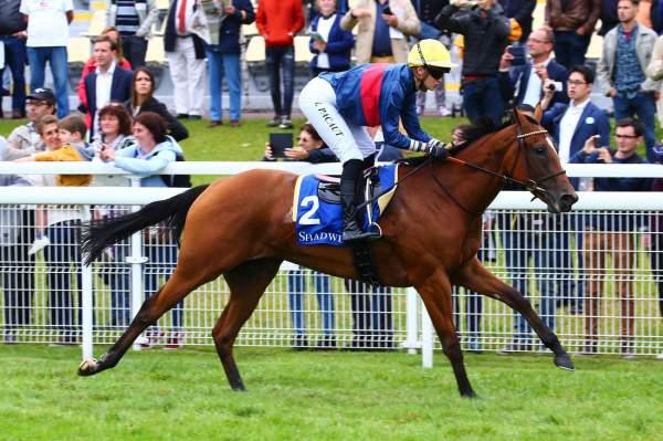 Photo de AFFICIONADO cheval de PLAT