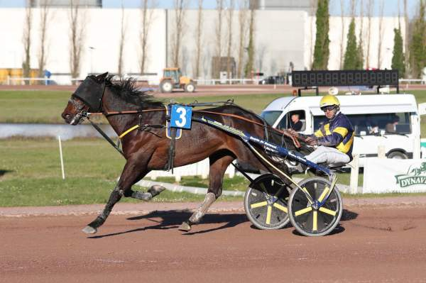 Photo de CAP DE NARMONT cheval de TROT ATTELE