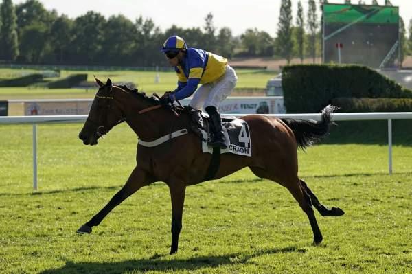 Photo de GOLDIE STAR cheval de PLAT