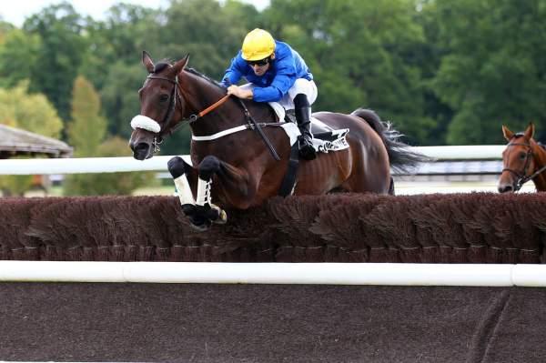Photo de ARBAROK cheval de HAIES