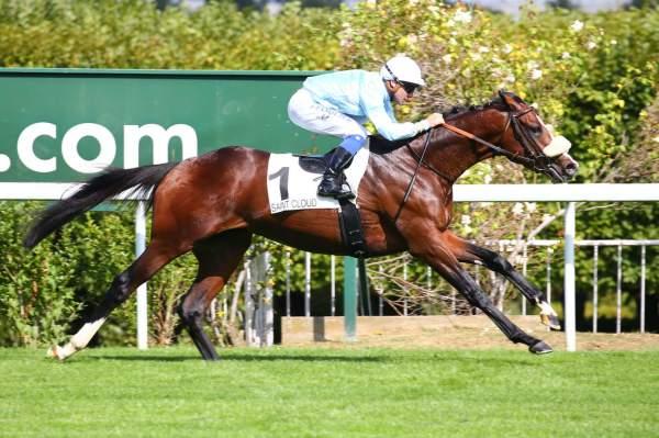 Photo de SKYWARD cheval de PLAT