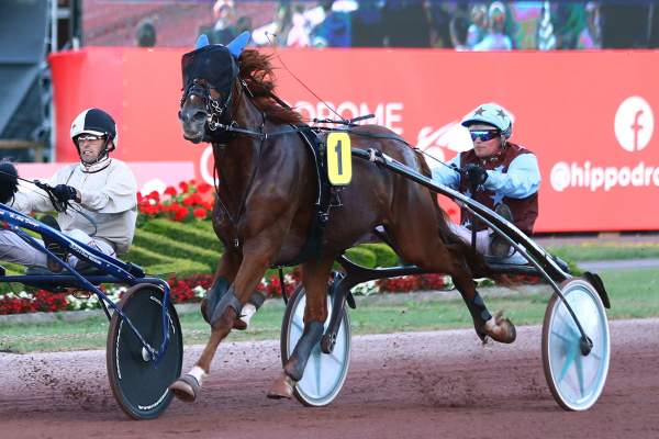 Photo de FLASH QUICK cheval de TROT ATTELE