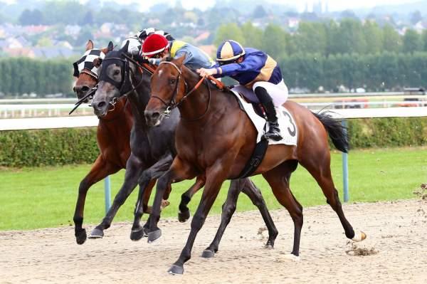 Photo de MON AMI L'ECOSSAIS cheval de PLAT