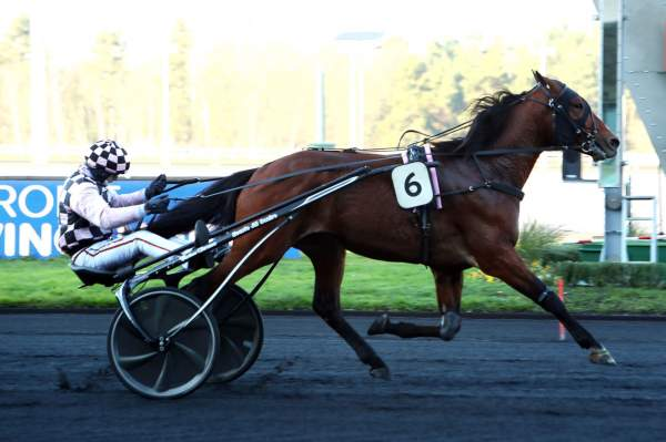 Photo de FIDELE ROYAL cheval de TROT ATTELE