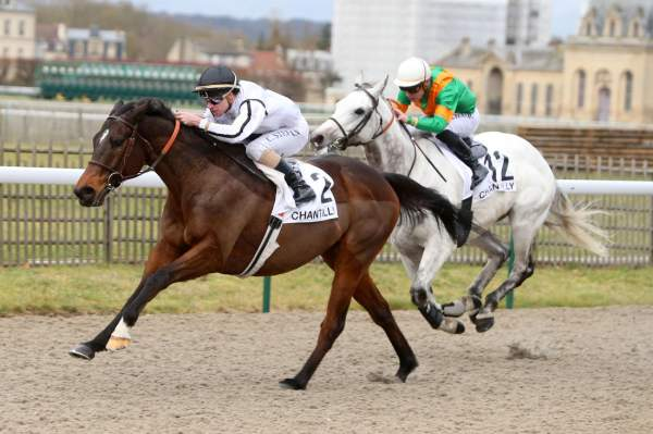Photo de ZEMINDARI cheval de PLAT