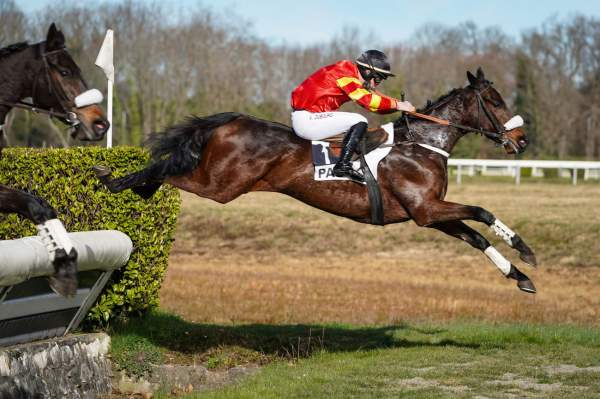 Photo de GALANT DU CHENET cheval de STEEPLE CHASE