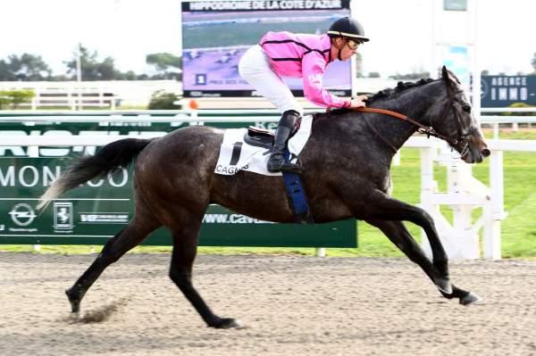 Photo de BAILEYS BALLE  cheval de PLAT