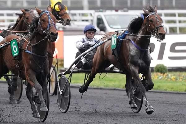 Photo de EL SANTO HAUFOR cheval de TROT ATTELE