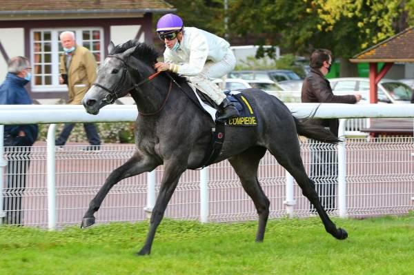 Photo de INCARVILLE cheval de PLAT