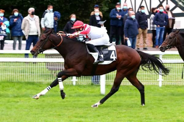 Photo de CARLTON CHOICE cheval de PLAT