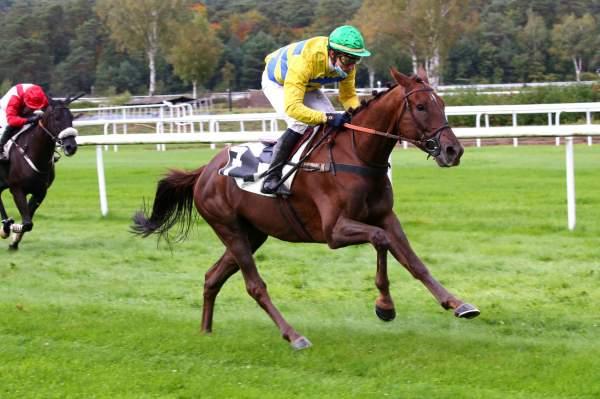 Photo de GREMLIN DU LARGE cheval de HAIES